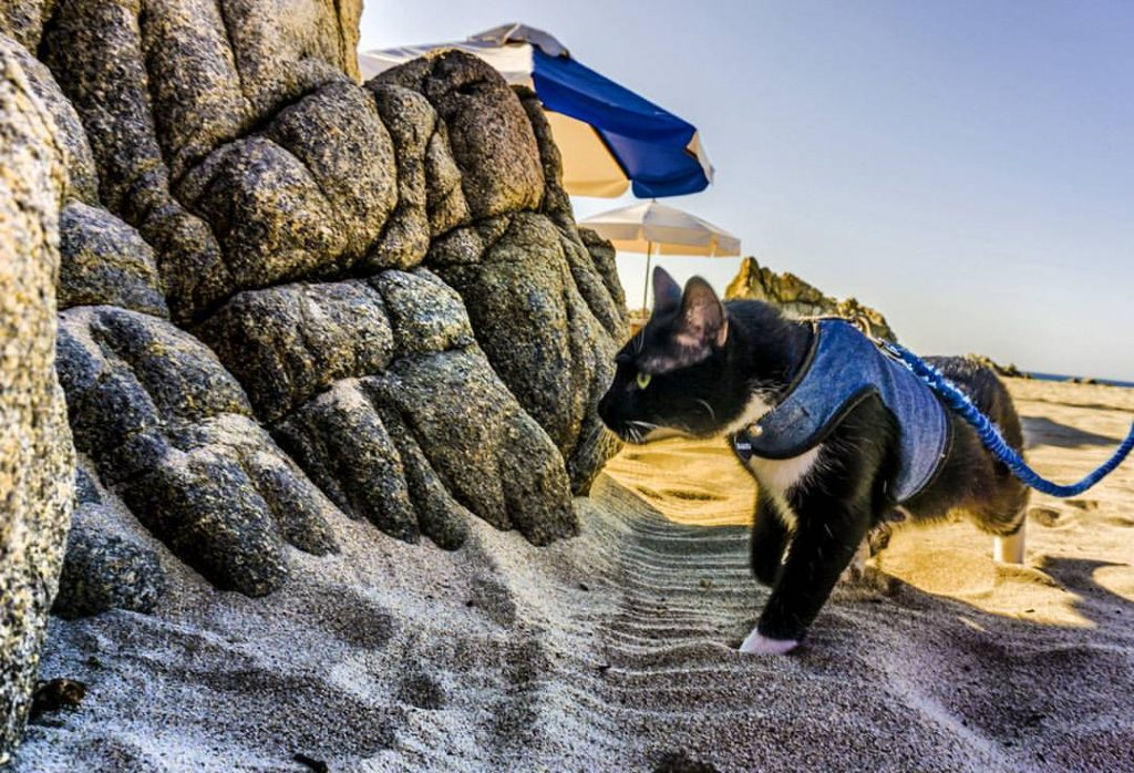Bambú en la playa