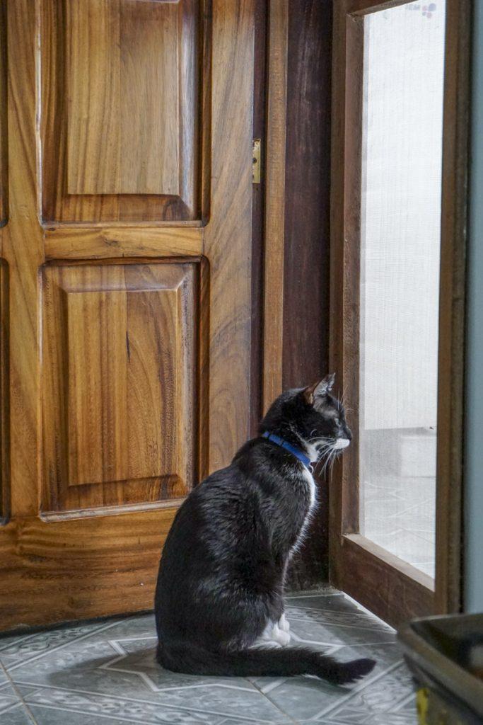Bambú en la puerta