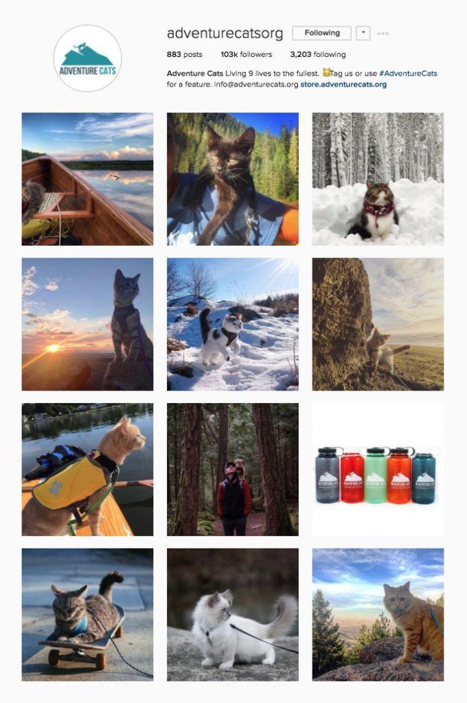 Instagram Adventure Cats Org