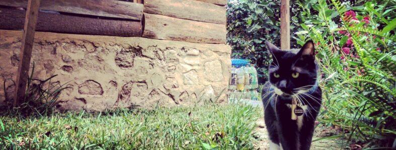 Bambú en Guatemala disfrutando del jardín